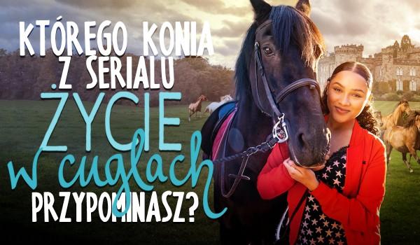 """Którego konia z serialu """"Życie w cuglach"""" przypominasz?"""