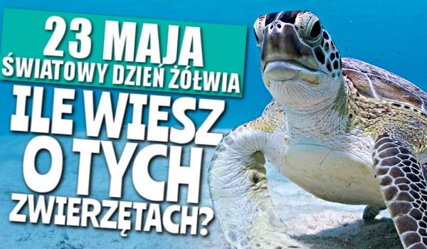 23 maja to Światowy Dzień Żółwia, ile wiesz o tych zwierzętach?