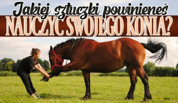 Jakiej sztuczki powinieneś nauczyć swojego konia?