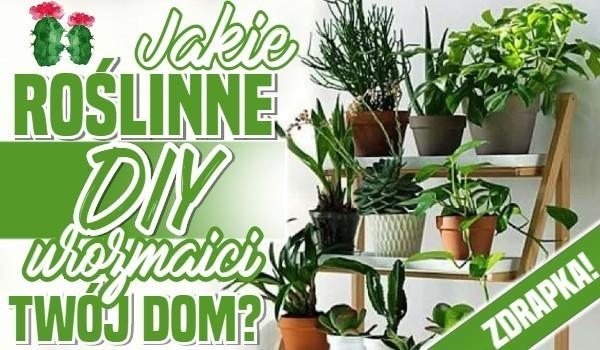 Jakie roślinne diy urozmaici Twój dom? Zdrapka!