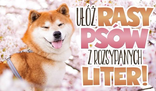 Ułóż rasy psów z rozsypanych liter!