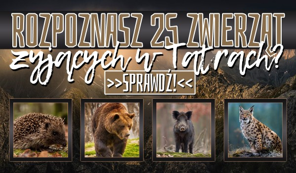 Czy rozpoznasz 25 zwierząt żyjących w Tatrach?