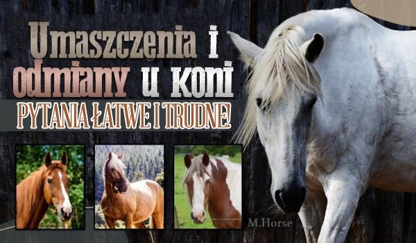 Pytania łatwe i trudne na temat umaszczenia i odmian u koni!