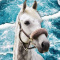 Julia_the_horse
