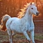Melody_Horse