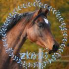 ZKB123