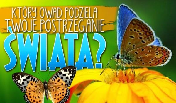 Który owad podziela Twoje postrzeganie świata?