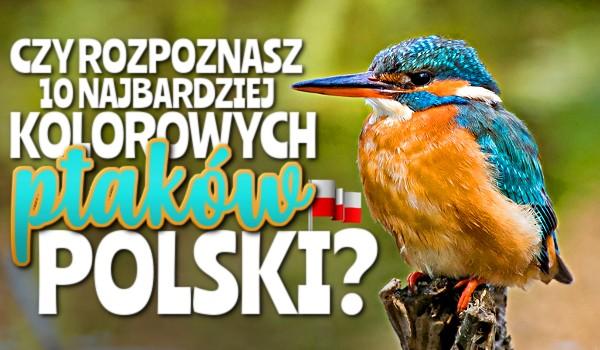 Czy rozpoznasz 10 najbardziej kolorowych ptaków Polski?