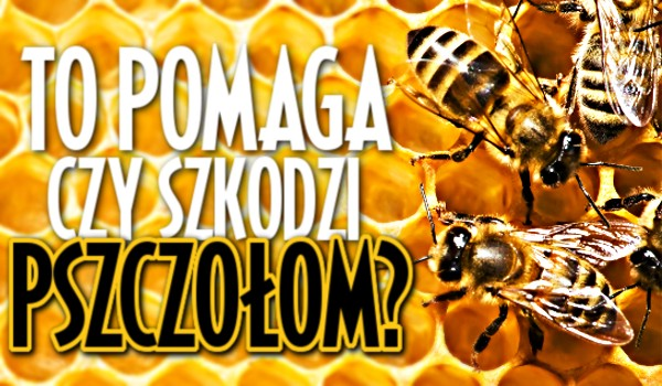Czy to pomaga, czy szkodzi pszczołom?