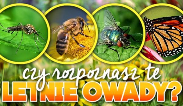 Czy rozpoznasz te letnie owady?