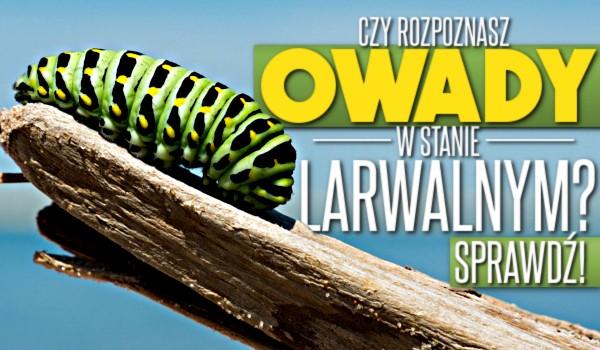 Czy rozpoznasz owady w stadium larwalnym?