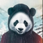 panda17_zaobserwuje