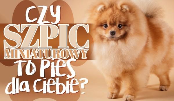Czy szpic miniaturowy to pies dla Ciebie?