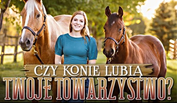Czy konie lubią Twoje towarzystwo?