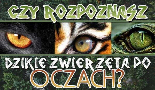 Czy rozpoznasz dzikie zwierzęta po ich oczach? Sprawdź!