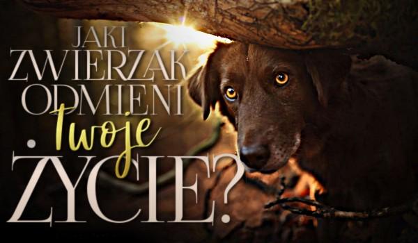 Jaki zwierzak odmieni Twoje życie?
