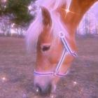 _Horse.Racer_