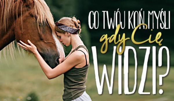Co Twój koń myśli, gdy Cię widzi?