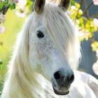 kocham_konie0
