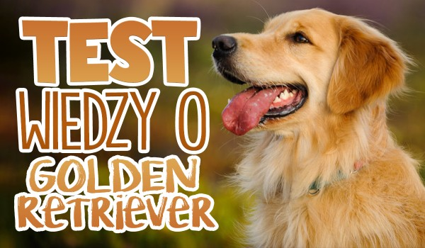 Test wiedzy – Golden Retriever!