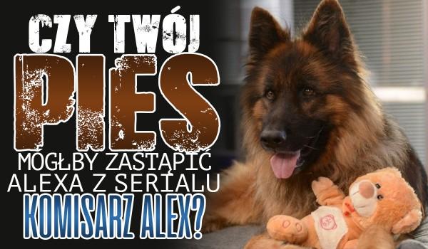 """Czy Twój pies mógłby zastąpić Alexa z serialu """"Komisarz Alex""""?"""