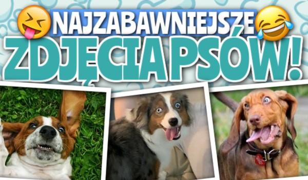 Najzabawniejsze zdjęcia psów – głosowanie