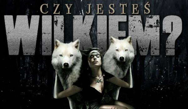 Czy jesteś wilkiem?