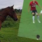 sportowe_EGO