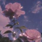 Rose_Angel