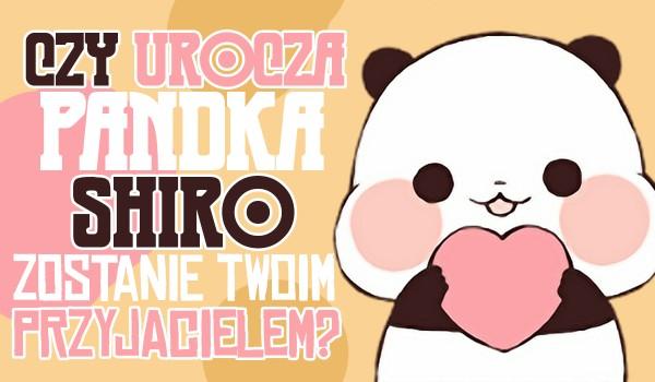 Czy urocza pandka Shiro zostanie Twoim przyjacielem?