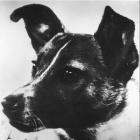 Ms.dog