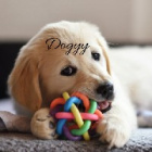 Dogyy