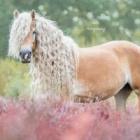 lady_horse