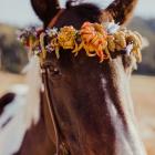 flower.horse