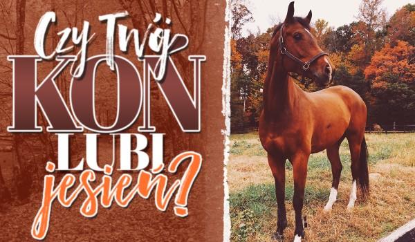 Czy Twój koń lubi jesień?