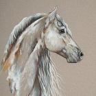 _horsses_