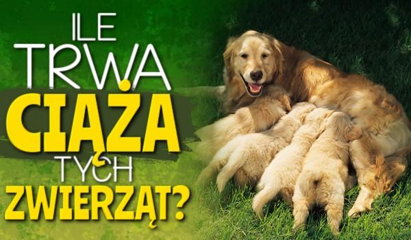 Ile trwa ciąża tych zwierząt?