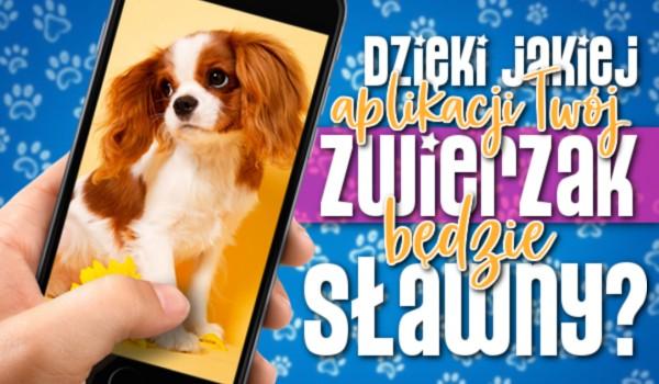 Dzięki jakiej aplikacji Twój zwierzak będzie sławny?