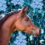 Siwa.Horse