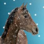 Horse33