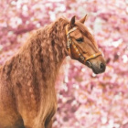 .Horse33.