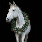 Beloved_Horse