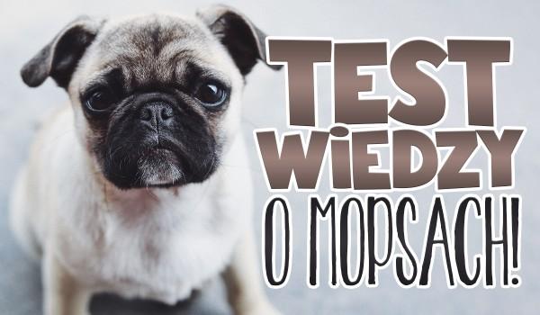 Test wiedzy o Mopsach!