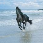 I.love.horse
