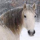 Hello_Horses