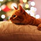.Pastel._.cat.