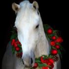 Avalon.horse