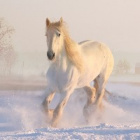 .Sindarin_Pony.