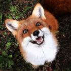 Fox_girl01
