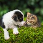 Dog_cat_girl1503
